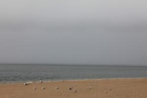 La plage et la mer et les mouettes