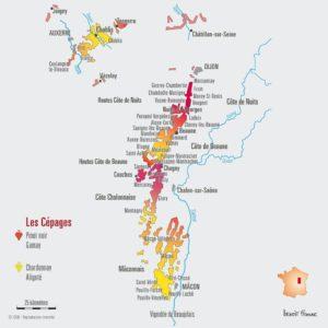 Le vignoble de Bourgogne, petit mais puissant